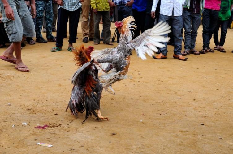 Antisipasi Judi Sabung Ayam