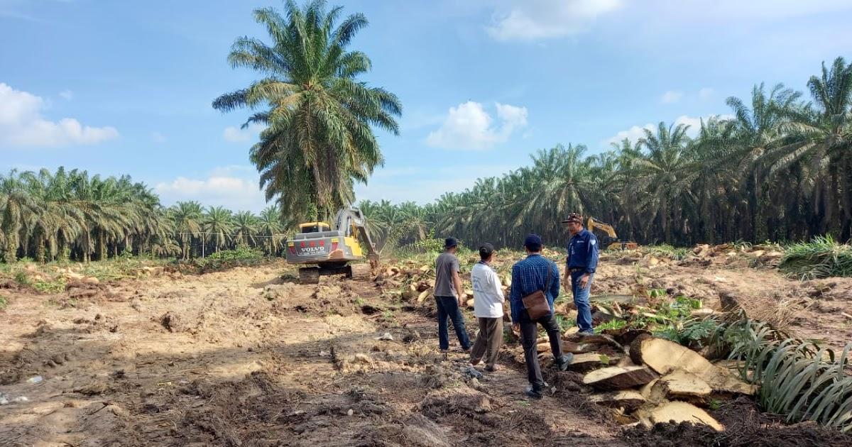 Karyawan Perusahaan Sawit Pelalawan Nekat Jadi Bandar Togel